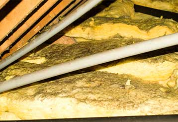 Attic Insulation Removal | Attic Cleaning Anaheim, CA