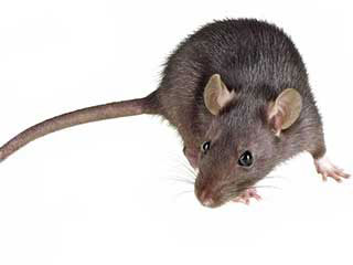 Rodent Proofing services | Attic Cleaning Anaheim, CA